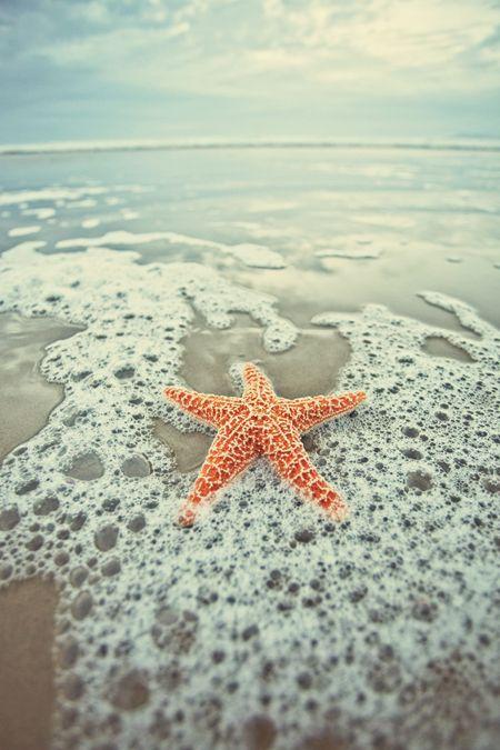 estrella de mar en el mar