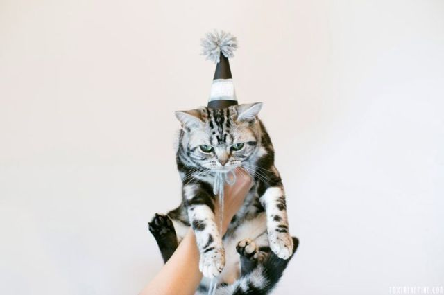 Cat in party hat